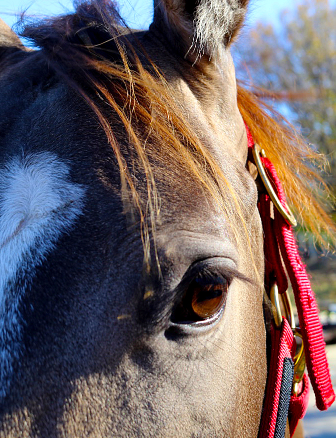 Department of Animal Science - Equine Image