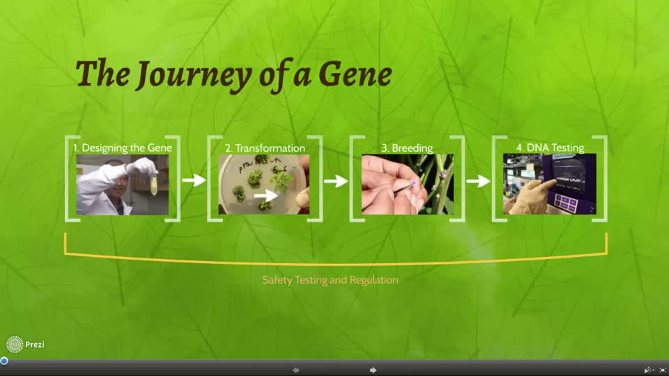 Intro to the Journey of a Gene - SDS