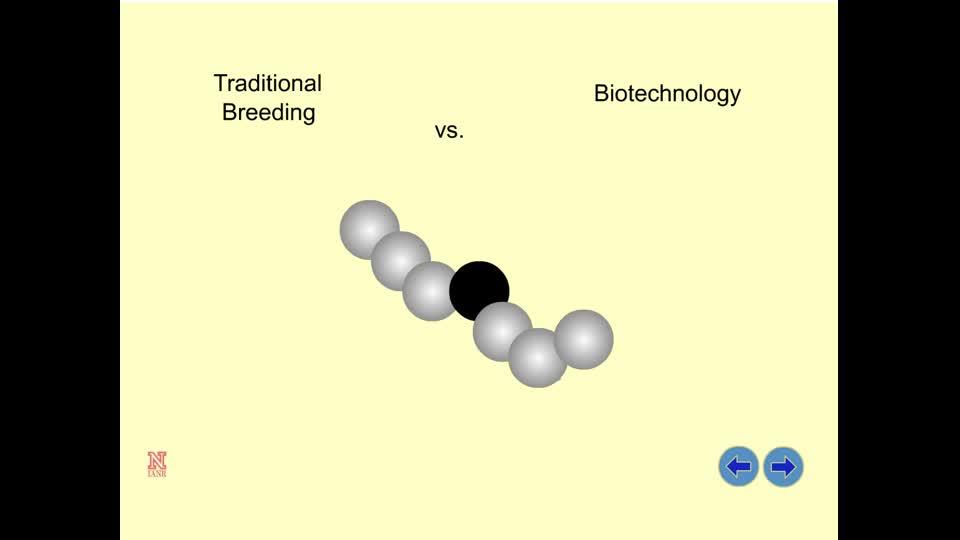 Traditional Breeding vs. Biotechnology