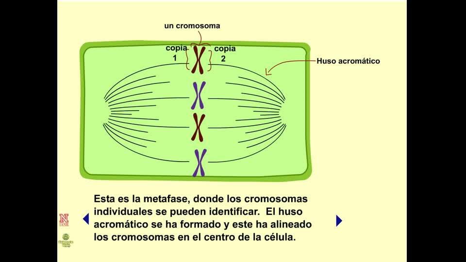 Inhibidores de la Mitosis