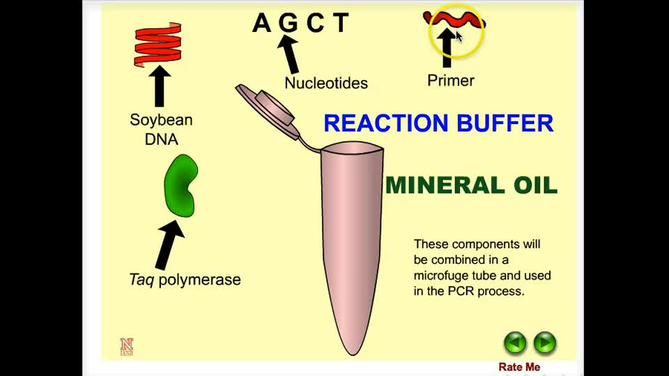 Polymerase Chain Reaction (PCR) in Plants