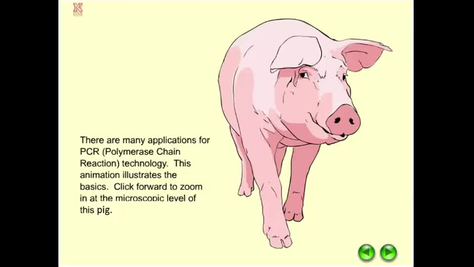 Polymerase Chain Reaction (PCR) in Pigs