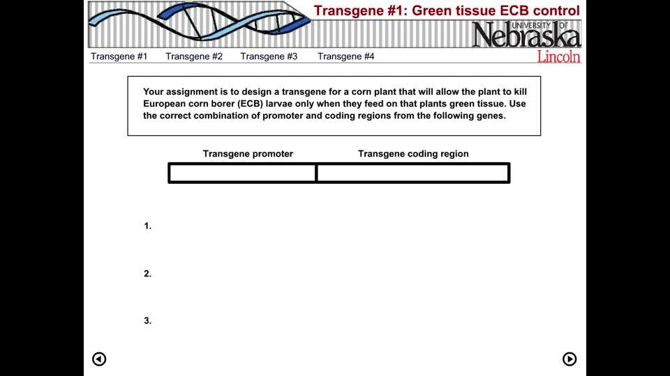 Transgene Design