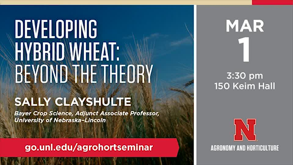 Developing Hybrid Wheat: Beyond the Theory