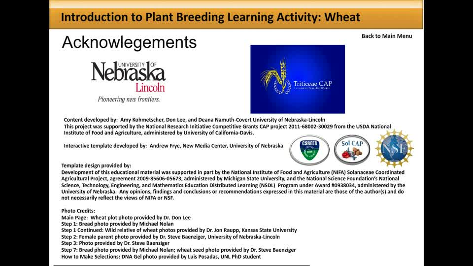 Wheat Breeding Activity