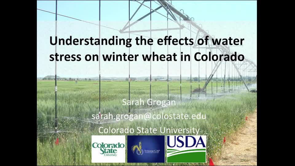 Understanding the effects of water stress on winter wheat in Colorado