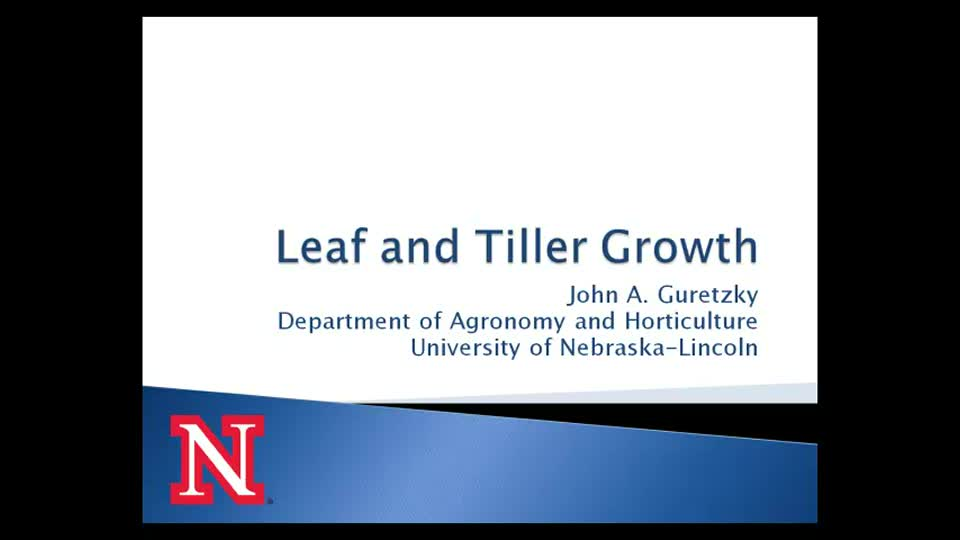 Leaf and Tiller Growth