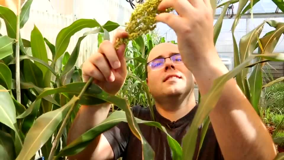 Improving Crops Through Genotyping and Phenotyping