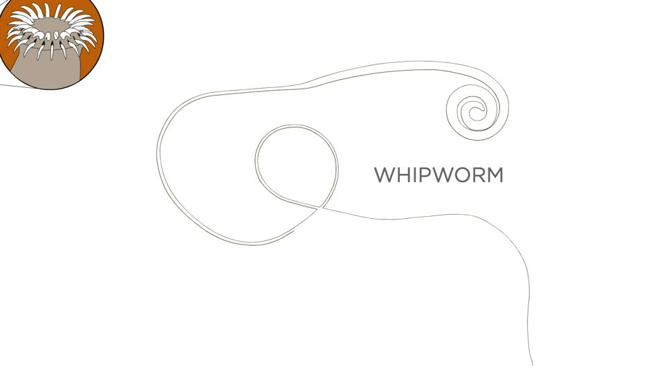 Pocket Science: A Whole Host of Worms