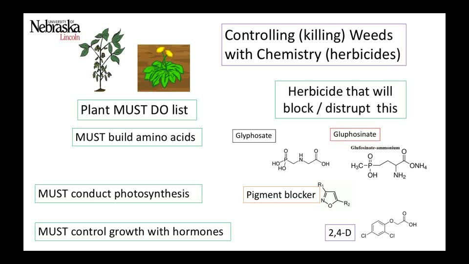 Chemical Control of Weeds
