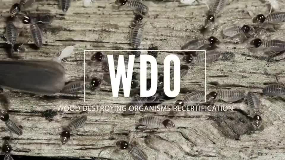 Wood Destroying Insects - recertification