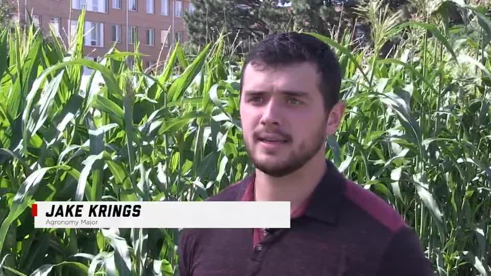 Jake Krings – Agronomy Major