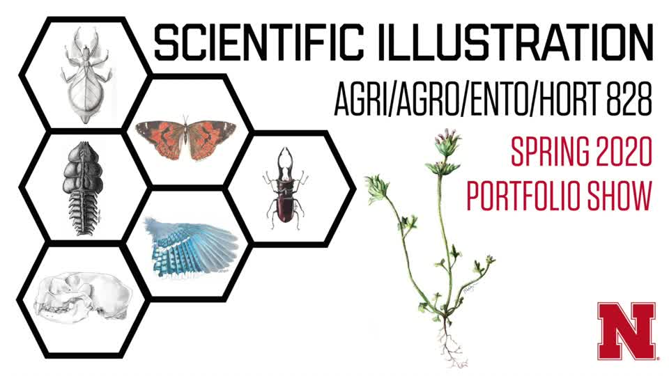 Scientific Illustration 2020 Student Portfolios
