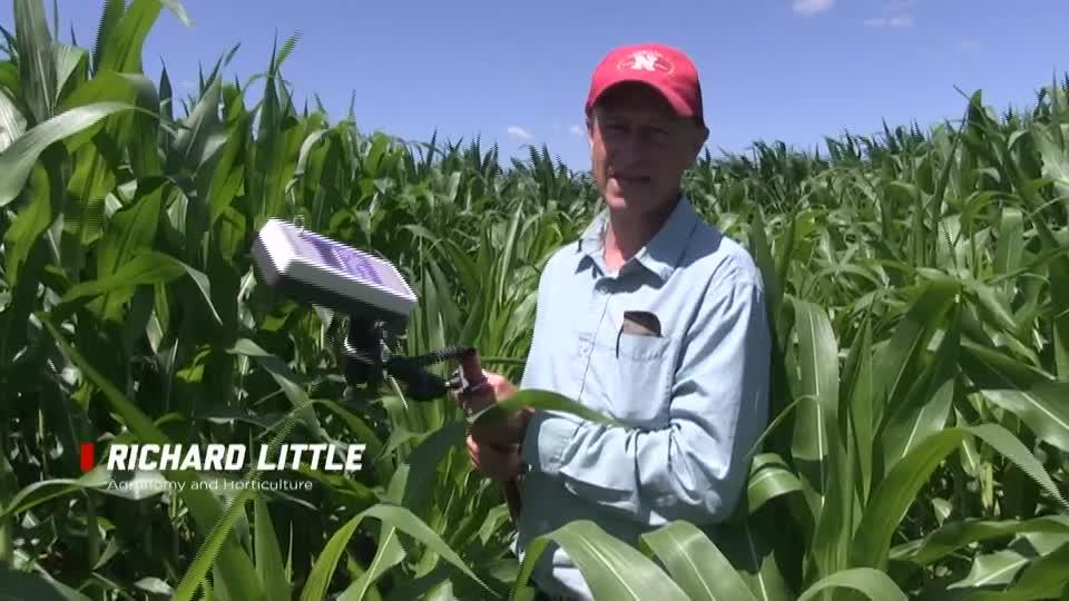 Using Rapid Scan & Lysimeters in Corn Trial
