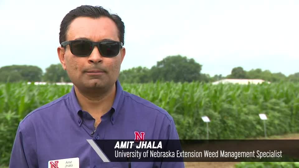 Introduction by Amit Jhala - 2020 Virtual Field Day for Management of Atrazine, Glyphosate, and ALS Inhibitors-resistant Palmer amaranth in Corn