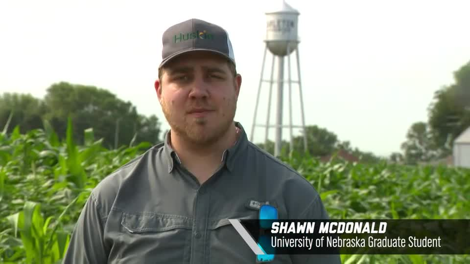 Shawn McDonald –Effects of Row Spacing, 2020 Virtual Field Day for Management of Atrazine, Glyphosate, and ALS Inhibitors-resistant Palmer amaranth in Corn