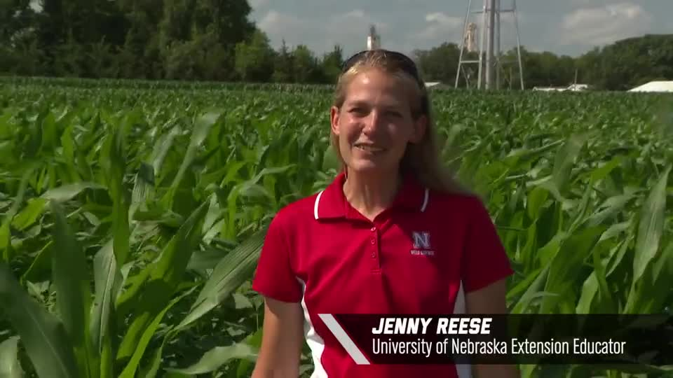 Jenny Reese – Non-GMO White Corn, 2020 Virtual Field Day for Management of Atrazine, Glyphosate, and ALS Inhibitors-resistant Palmer amaranth in Corn