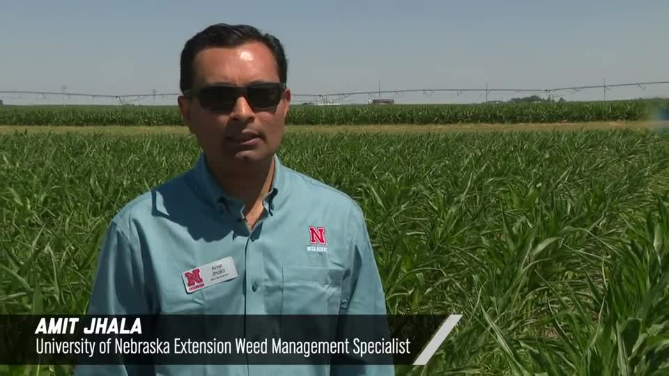 Atrazine Alternatives For PRE Weed Control In Corn, 2020 Virtual Weed Management Field Day at South Central Ag Lab