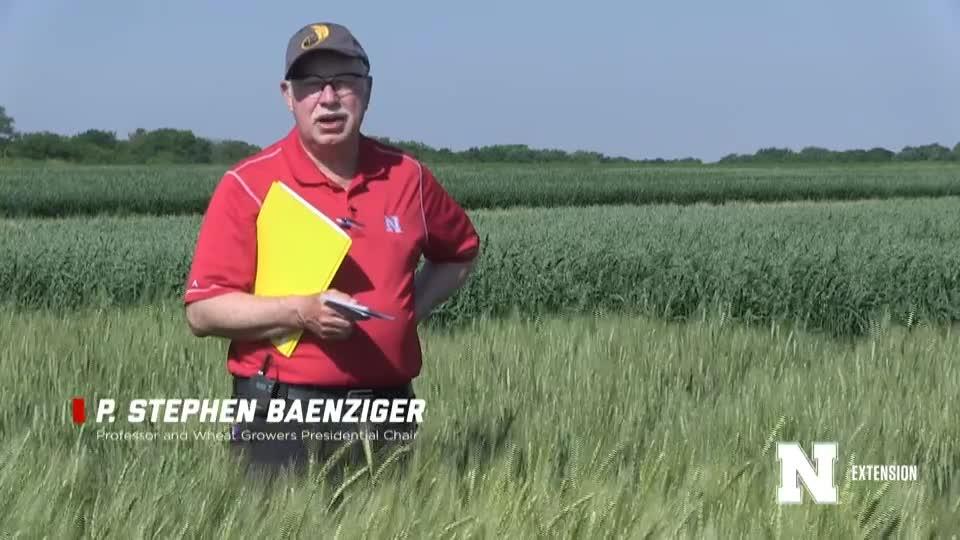 1. Intro - 2020 Eastern Nebraska Winter Wheat Variety Trial Virtual Tour