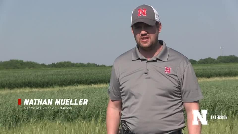 2. Intro and AM Cartwright - 2020 Eastern Nebraska Winter Wheat Variety Trial Virtual Tour