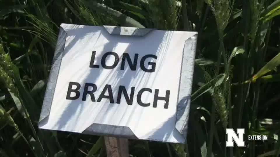 8. Long Branch - 2020 Eastern Nebraska Winter Wheat Variety Trial Virtual Tour