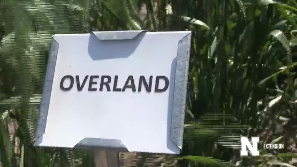 10. Overland - 2020 Eastern Nebraska Winter Wheat Variety Trial Virtual Tour