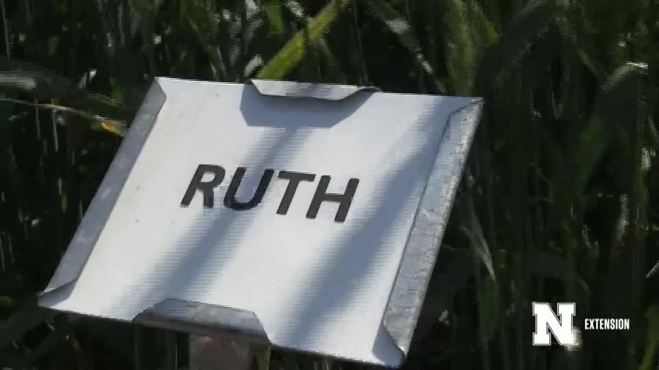 11. Ruth - 2020 Eastern Nebraska Winter Wheat Variety Trial Virtual Tour