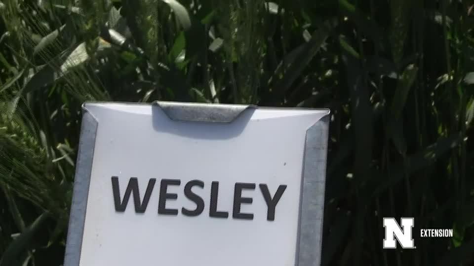 13. Wesley - 2020 Eastern Nebraska Winter Wheat Variety Trial Virtual Tour