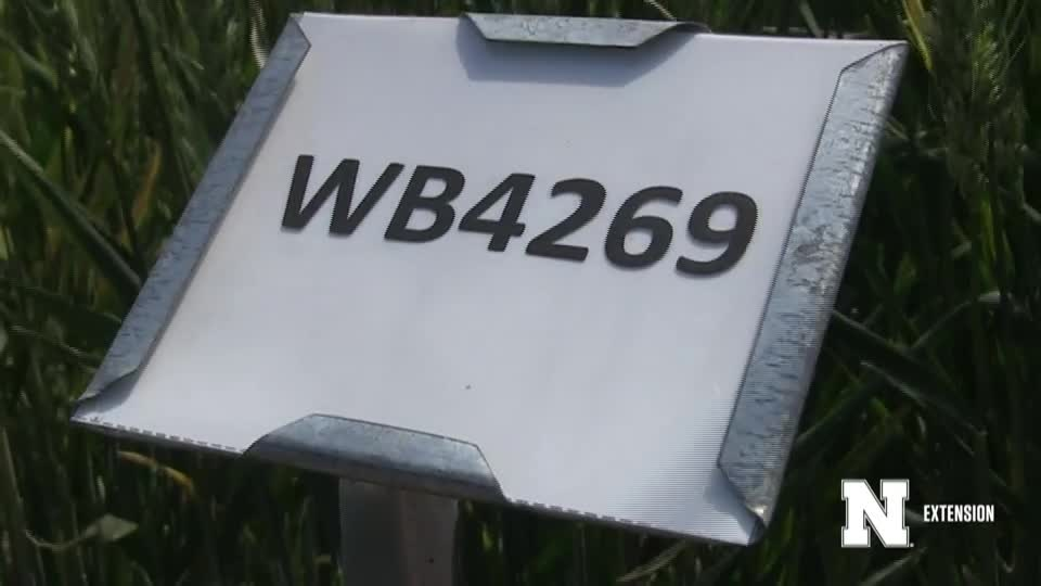 15. WB4269 - 2020 Eastern Nebraska Winter Wheat Variety Trial Virtual Tour