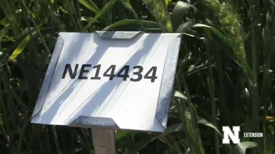 20. NE14434 - 2020 Eastern Nebraska Winter Wheat Variety Trial Virtual Tour