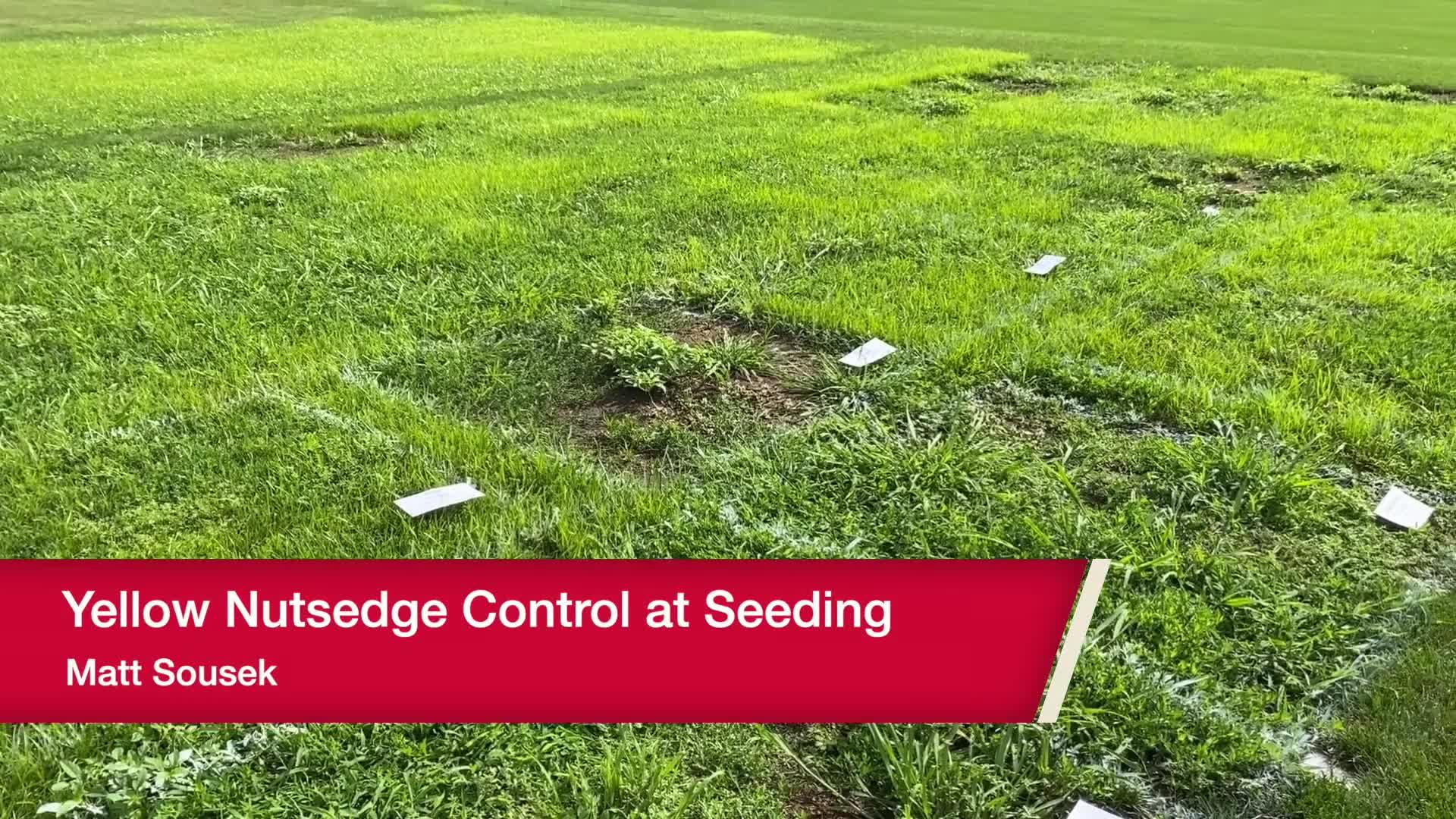 Yellow Nutsedge Control at Seeding