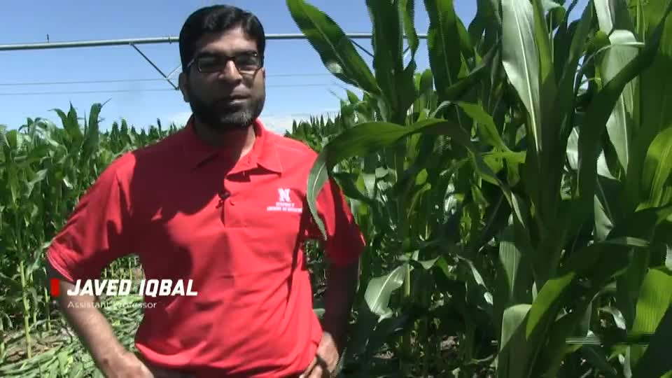 Corn Nitrogen Rate and Timing Field Trials with Javed Iqbal