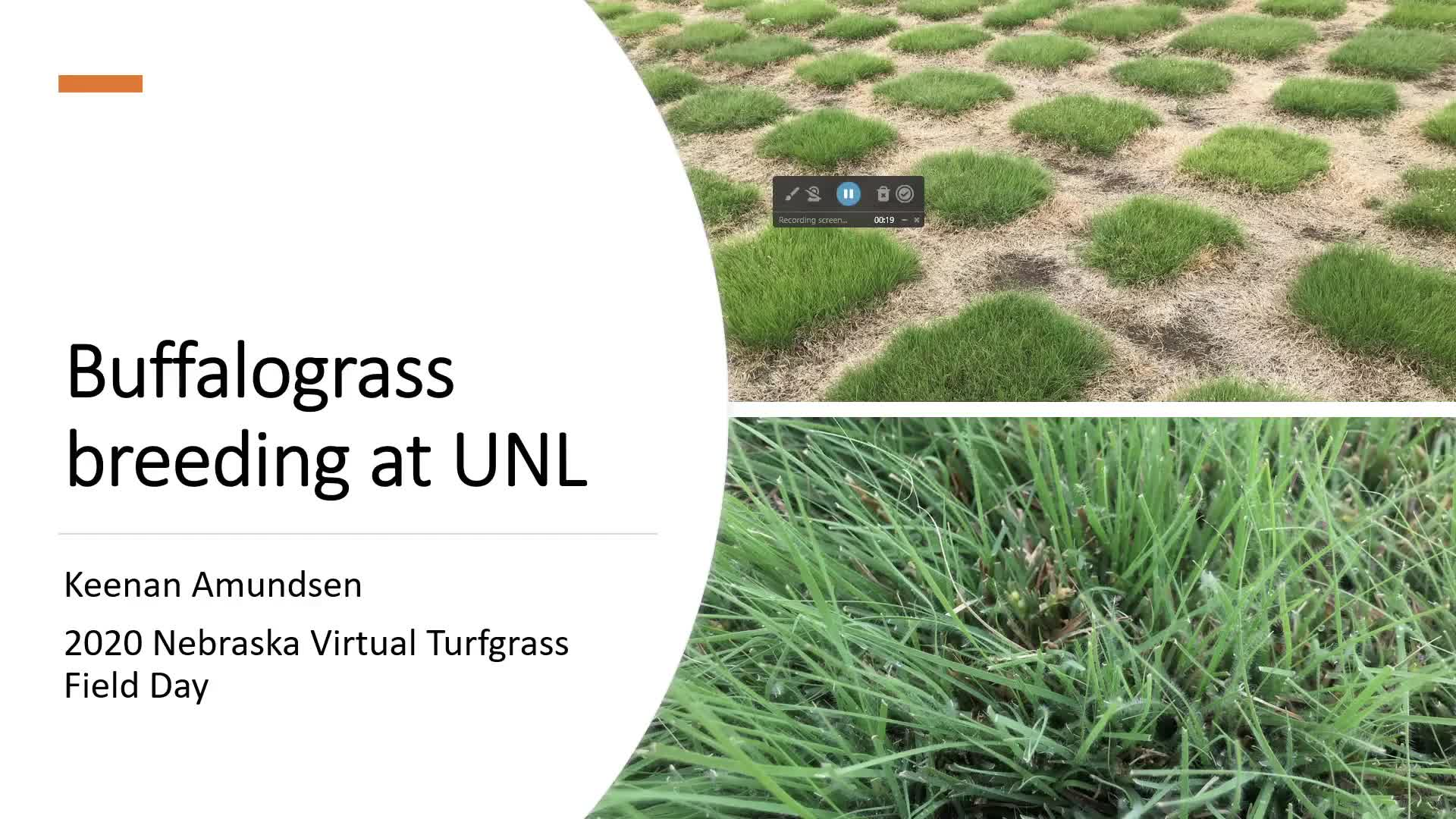 Buffalograss and Turfgrass Breeding Project
