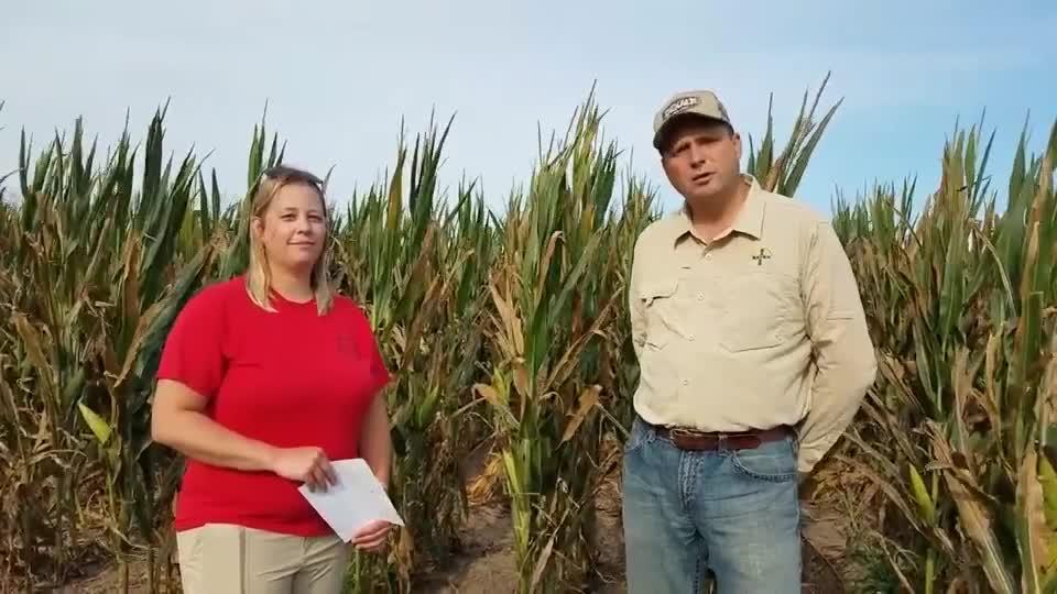A Look Into Bayer Crop Science - Corn Breeding