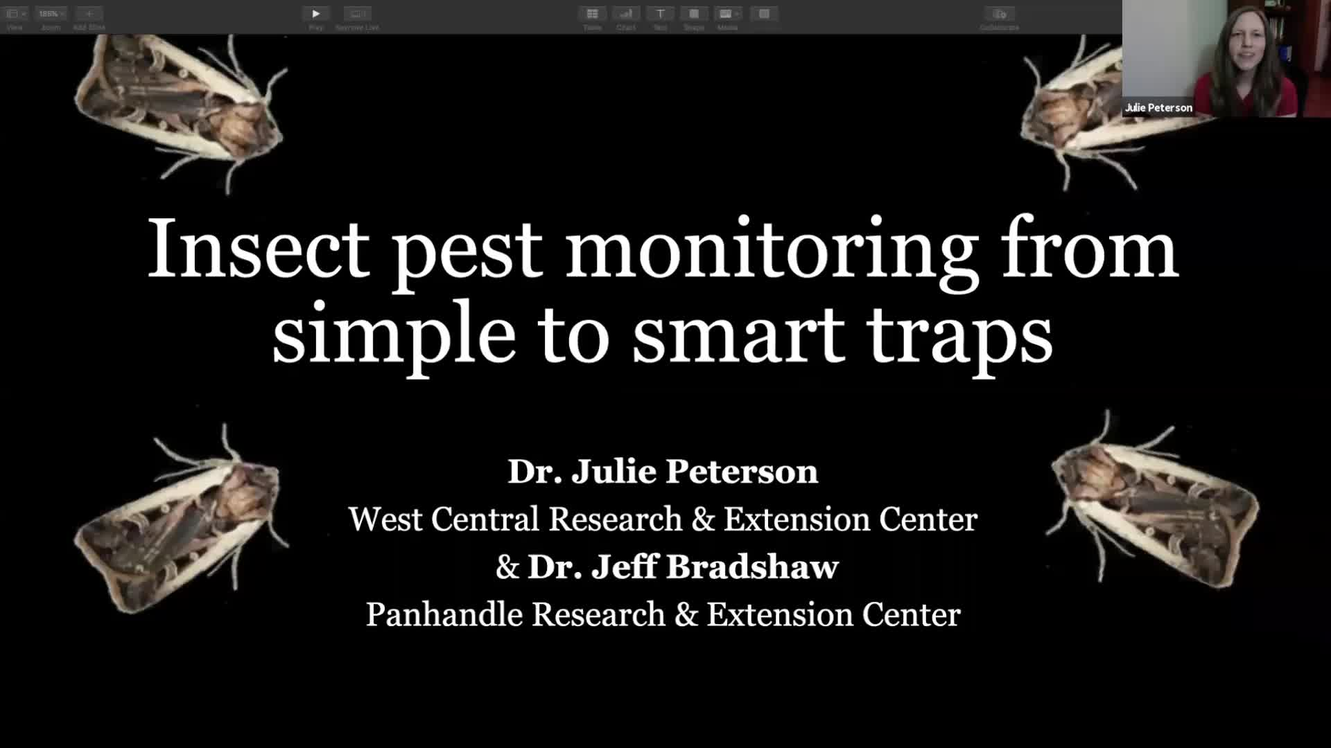 Insect Pest Monitoring from Simple to Smart Traps