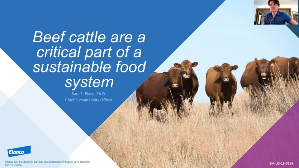 Beef cattle are a critical part of a sustainable food system