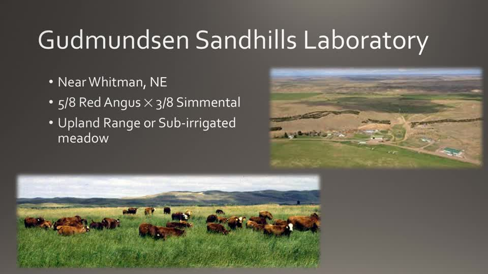 GSL Beef Physiology Research Update