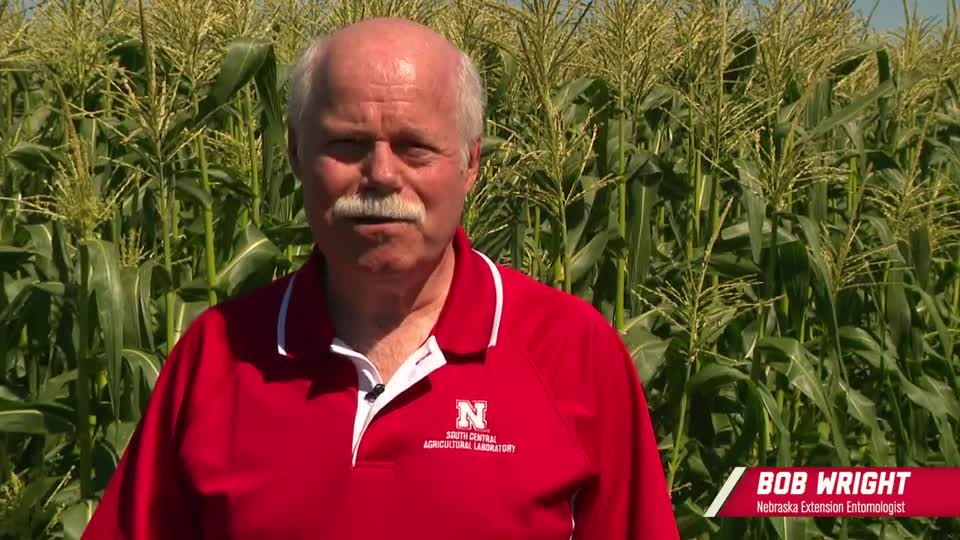6 - Corn Earworm Susceptibility to Bt Corn Proteins