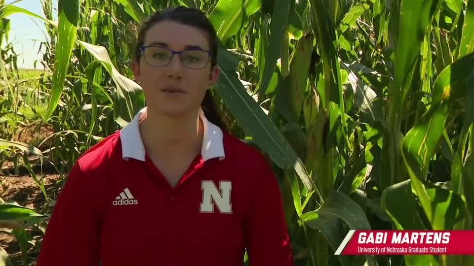 7 - Bacterial Leaf Streak in the Field: Identifying, Researching, and Managing the Disease