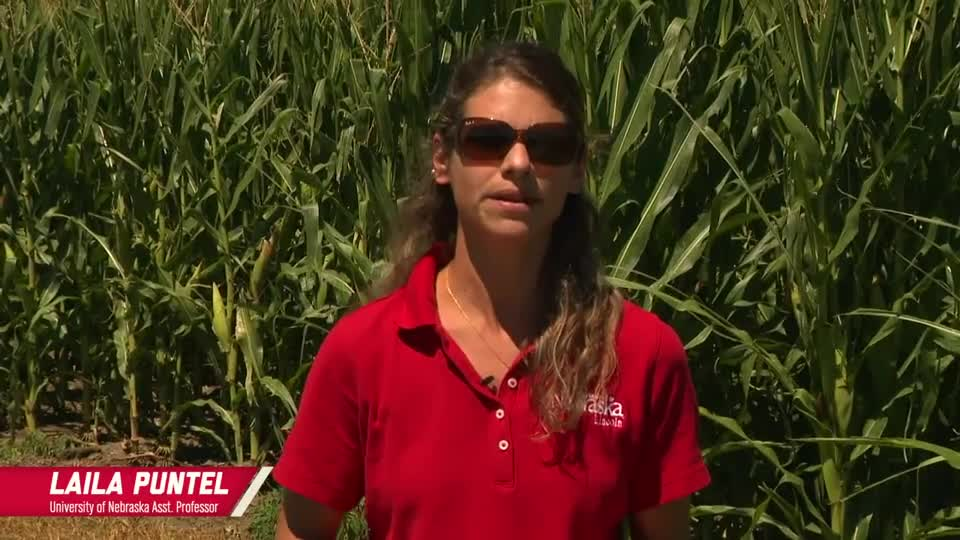 9 - 2020 South Central Ag Lab Field Day