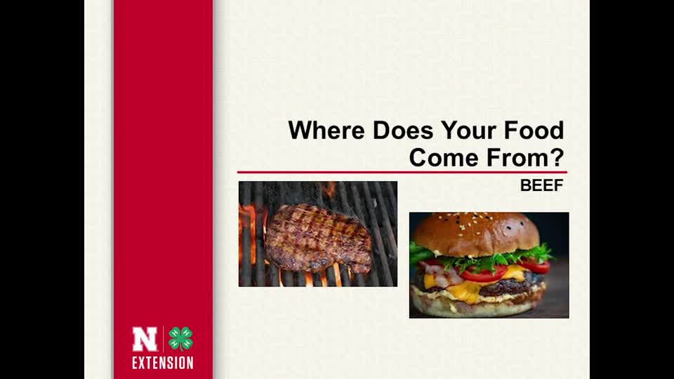 Beef - Where Does Your Food Come From?