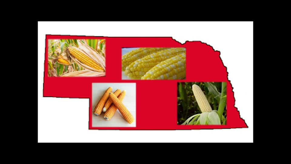 Corn - Where Does Your Food Come From?