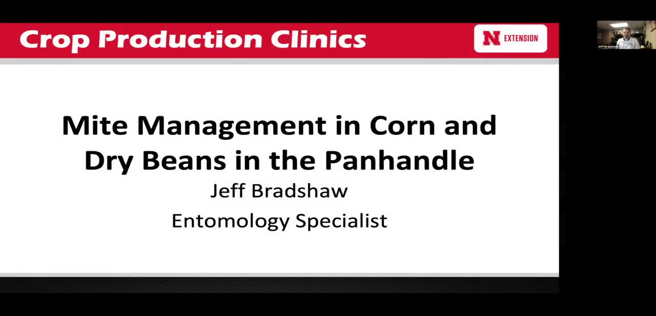 Mite Management in Corn and Dry Beans in the Panhandle