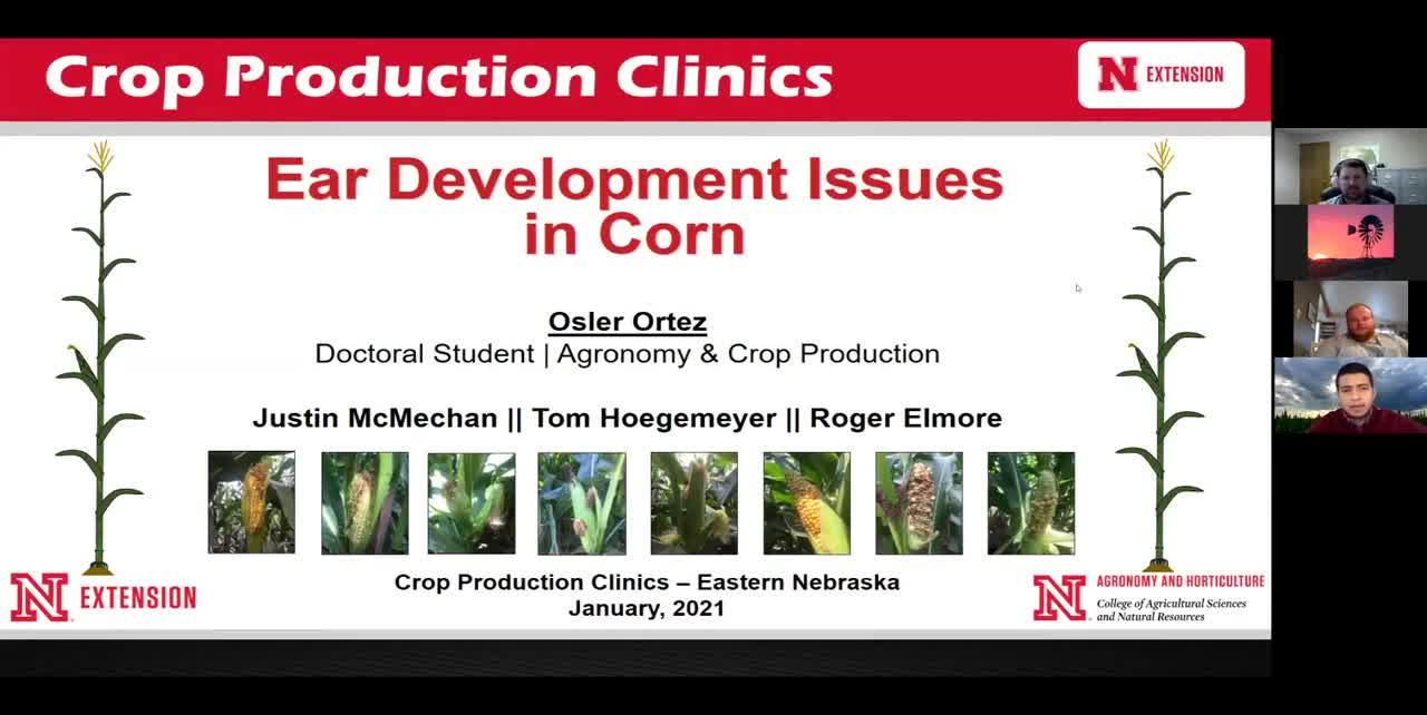 Ear Development Issues in Corn
