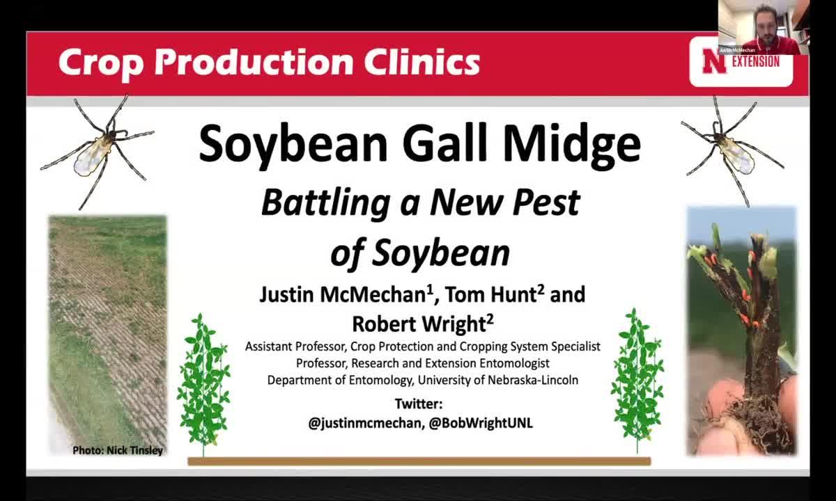 Soybean Gall Midge: Battling a new pest of soybean
