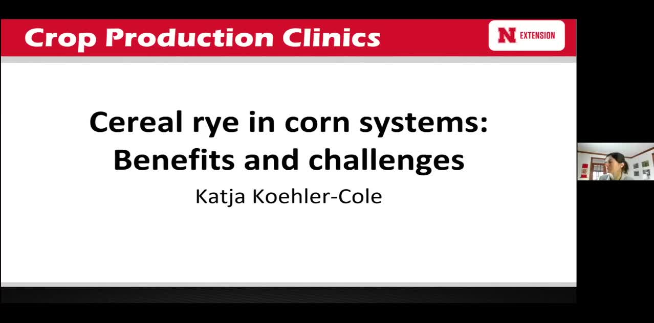 Cereal rye in corn systems: Benefits and Challenges