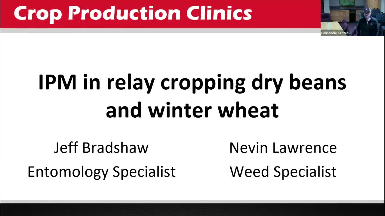 IPM in relay cropping dry beans and winter wheat