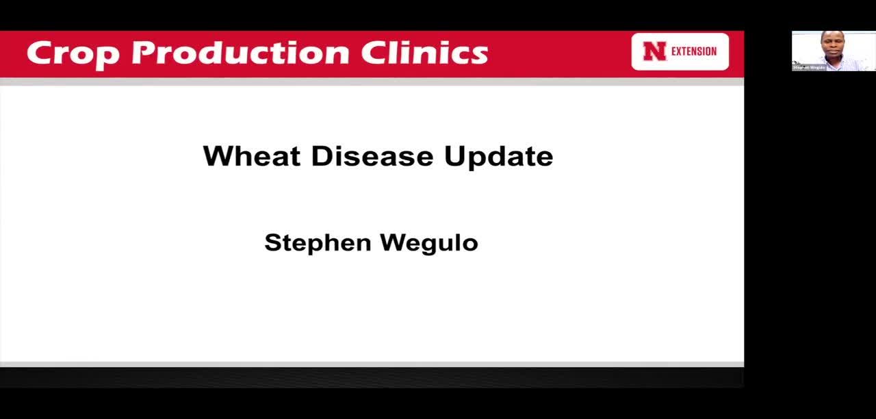 Wheat Disease Update