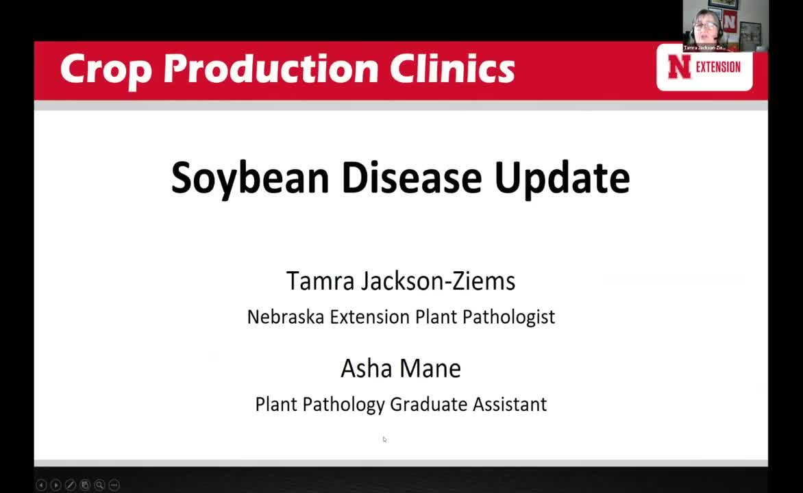 Soybean Disease Update
