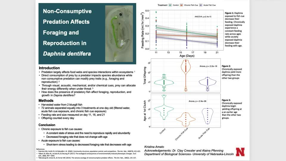 Trait-mediated effects of non-consumptive predation on Daphnia dentifera